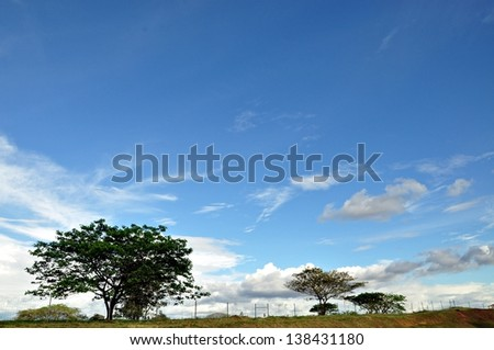 Trees with the blue sky background.