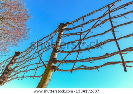 Trees with twigs bound to a grid #1334192687