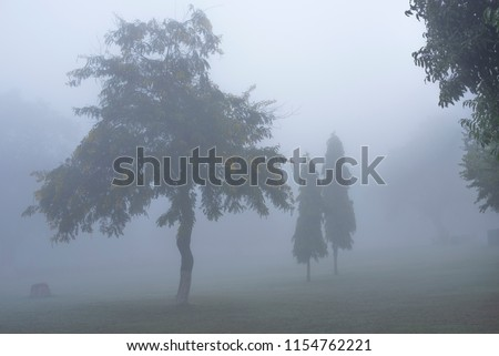 Trees with various shapes and contours in a garden of Khajuraho temple complex with very thick dense fog forming a very exciting mysterious and enjoyable landscape Madhya Pradesh India  #1154762221
