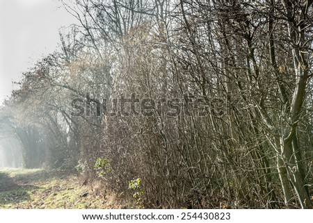 stock-photo-trees-without-leaves-on-foggy-morning-254430823.jpg