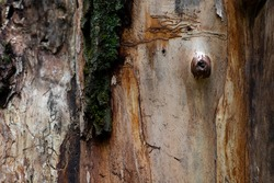 Trees. Wood background. Abstraction tree. Tree trunk bends. Bark of tree. Tree bark background.