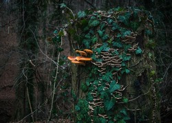 Treestump with ivy and a Mushroom