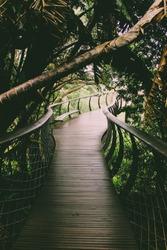 Treetop Canopy Walkway at Kirstenbosch Botanic Garden   Aerial Boardwalk in Cape Town, South Africa