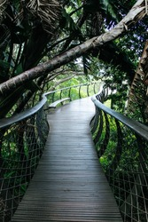 Treetop Canopy Walkway at Kirstenbosch Botanic Garden | Aerial Boardwalk in Cape Town, South Africa