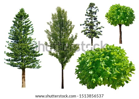 Treetop green leaf tropical timber tree isolated garden, verdant leaves brown wood forest, hardwood botany lumber plant woody branches park. #1513856537