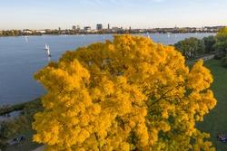 treetop of a rowan tree at alster lake in Hamburg in autumn
