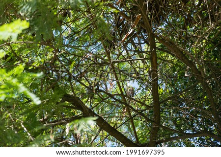 Treetop view from below. Sunny day. Trees, branches, plants and blue sky.