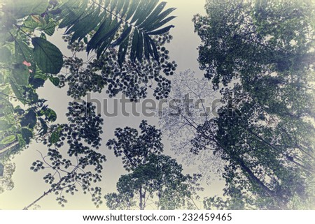 Treetops in tropical Rainforest in Costa Rica - Arenal Volcano National Park, Alajuela province, Costa Rica