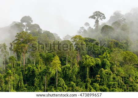 Treetops of Dense Tropical Rainforest With Morning Fog Located Near The Malaysia-Kalimantan Border #473899657