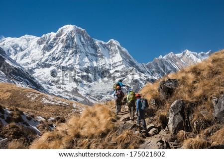 Trekking in Annapurna region, with Annapurna South in background, Nepal #175021802