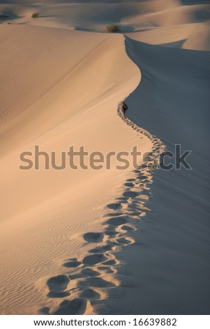Trekking in sand dunes. Sunrise. Stovepipe Wells. Death Valley national park. California. USA