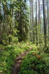 Trekking trail at the Finnish national park petkeljärvi