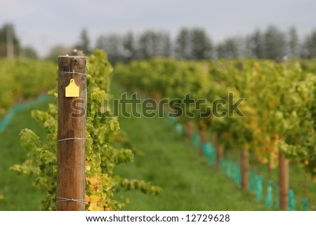 Trellis post in a modern wine vineyard, yellow number tag blanked out.
