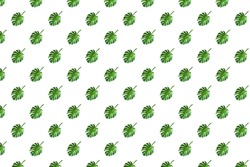 Trendy Seamless pattern.Monstera leaf on a white background.Floral template.Minimal concept.