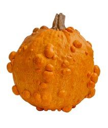 Trendy ugly organic orange pumpkin isolated on white background.