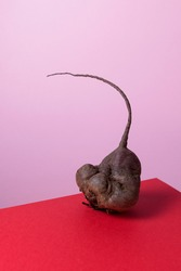 Trendy ugly vegetables. Organic food. Abnormal deformed sugar beet root on a red-pink background with copy space.