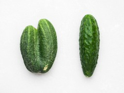 Trendy ugly vegetables. Two fresh cucumbers have merged. Close up, top view, copy space. Imperfect food