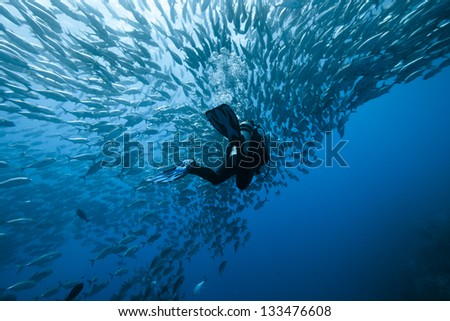 Stock Photo Trevally and diver at Panglao - Philippines