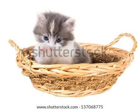 Tri-color washes kitten in a basket isolated on a white background