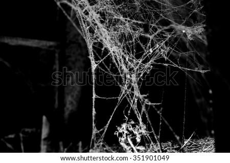 Triangle horror cobweb or spider web isolated on black background,horizontal photo