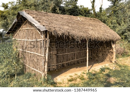 Tribal Hut having thatched roof, made from Bamboo Straws and sticks. A Typical house form of Tribal areas of Eastern India. Such houses are temporary and regulate temperature in natural way. - Image. #1387449965