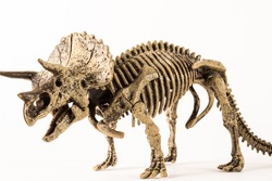 triceratops skeleton isolated on white background