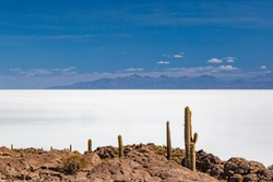 Trichocereus cactae in bright sunlight on Isla Incahuasi above the shiny white surface of the Salar de Uyuni, Bolivia
