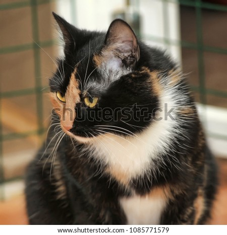 tricolor cat in the shelter #1085771579