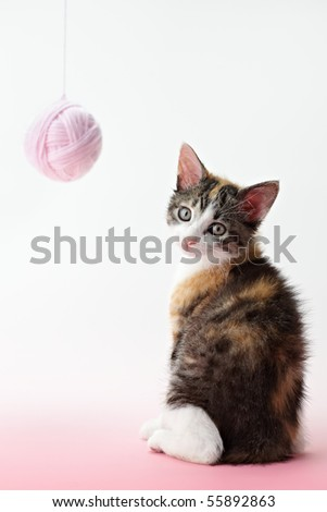 tricolor female kitten playing with ball of whool on pink background. Vertical shape, copy space
