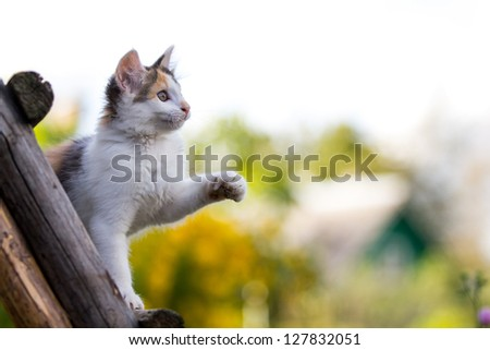 tricolor kitten on wooden stairs
