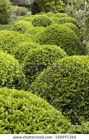 Trimmed topiary bushes in an English country garden
