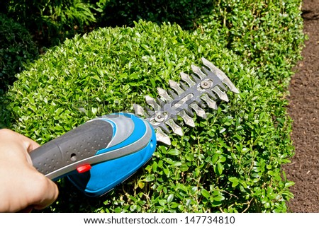 Trimming a bush