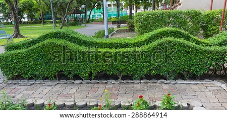 trimming shrub wave shape in park.