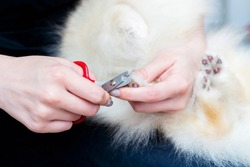Trimming the dog's claws. Dog's claw being trimmed with special scissors - selective focus on the point of interest where scissors meet a claw