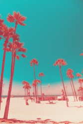 Tripical beach with palm trees. Holiday and vacation concept. California landscape. Surreal living coral toning. Vertical