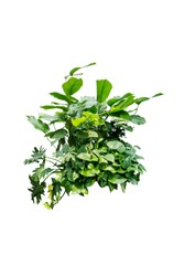 tripical jungle plant isolated include clipping path on white background