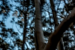 Trippy fragmented trees in dark forest under hazy blue sky - abstract motion-blurred background texture