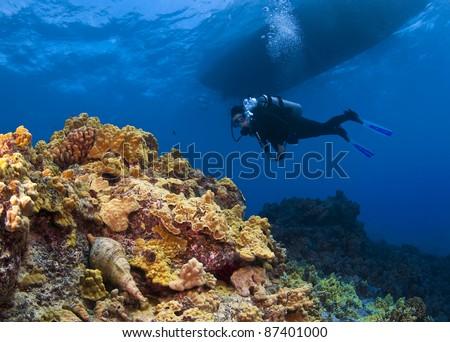 Triton Trumpet and Scuba Diver in  Hawaii