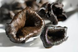 Trompette de la mort, Horn of plenty or Black trumpet. Scientific Name: Craterellus cornucopioides.  A delicious edible woodland mushroom with a funnel-shaped cap.