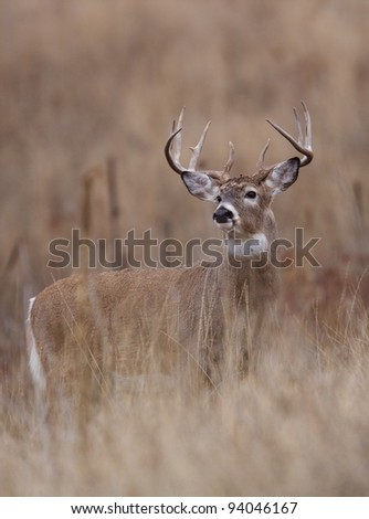Trophy Class Whitetail Buck
