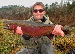 Trophy fish - a fly fisherman holding a huge colorful red record-sized Rainbow Trout, a fish related to salmon (salmonid)