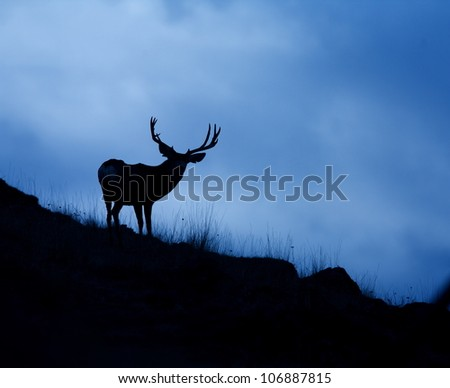 Trophy Mule Deer Buck Silhouetted against blue sky
