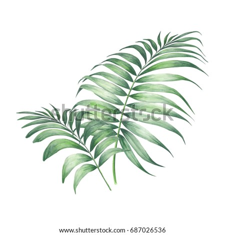 Tropic palm leaves composition. Watercolor botanical decor. - Shutterstock ID 687026536