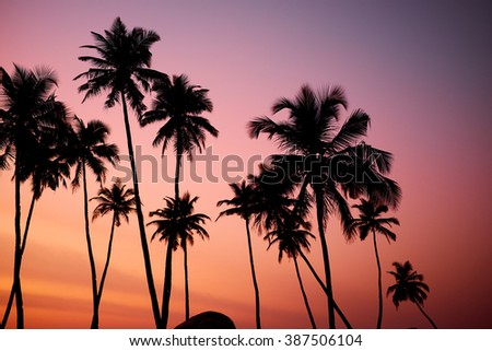 Tropic vew of beautiful coral sunset - Shutterstock ID 387506104