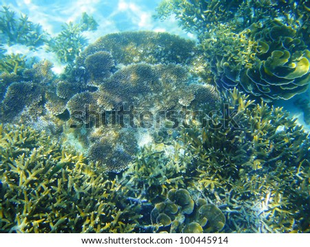 tropica coral in shallow water