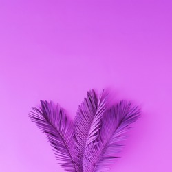 Tropical and palm leaves in vibrant bold purple color. Concept art. Minimal surrealism background.