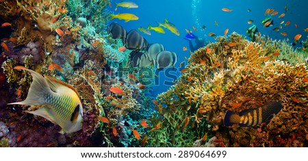 Tropical Anthias fish with net fire corals on Red Sea reef underwater #289064699