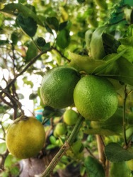 Tropical Asian fluits for health