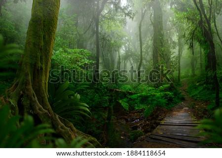Tropical asian jungle with wood bridge