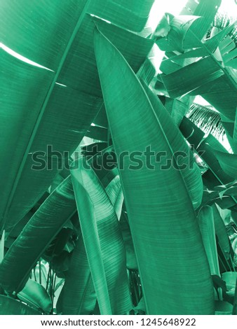 tropical background/banana leaves  - Shutterstock ID 1245648922